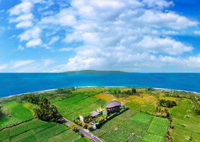 Big-Bali-FLELR